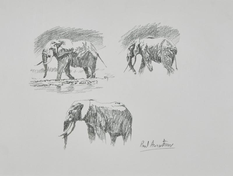 Elephant vignettes