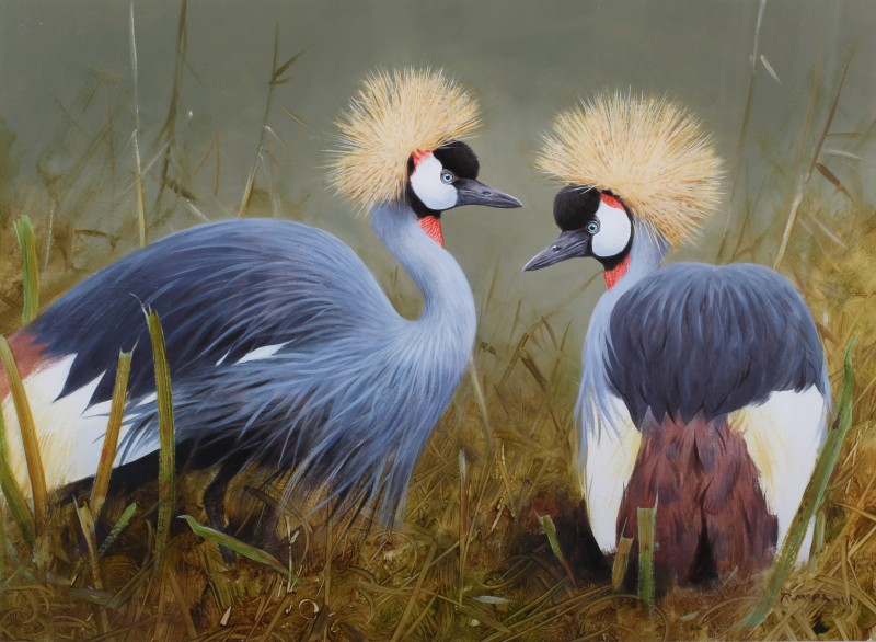 Grey-crowned cranes