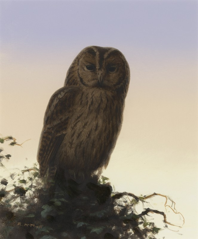 Rodger McPhail , Tawny Owl
