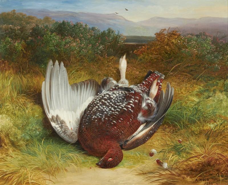 Still life of dead grouse