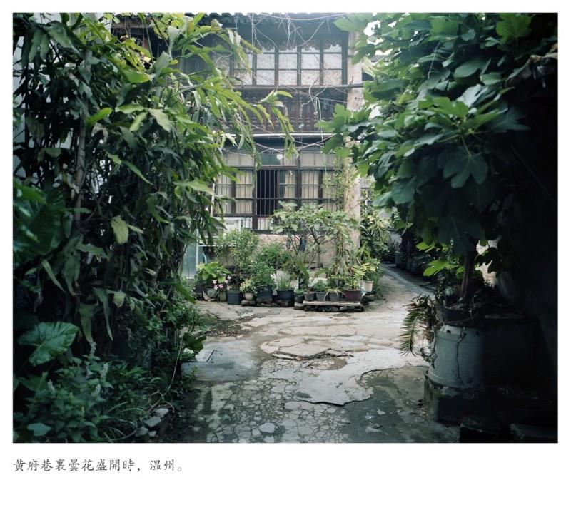 俞西奇《白玉兰》 Yu Xiqi White Magnolias 2012