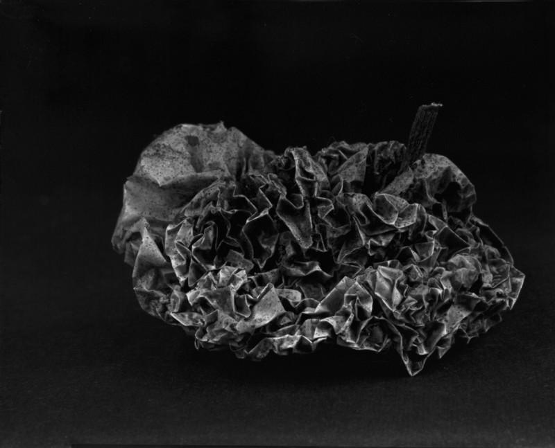 储楚 《物非物——果实》 Chu Chu Material/Immaterial - Fruit 2010