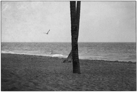 Elliott Erwitt, DAYTONA BEACH, FLORIDA, 1975