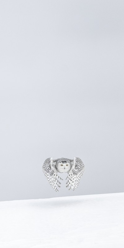 Vincent Munier, SNOWY OWL, FROM THE SOLITUDE SERIES, CANADA, 2006