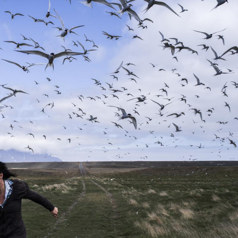 CIG HARVEY, The Judgement of Terns, Iceland, 2016