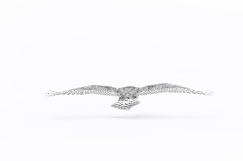 Vincent Munier, FLYING SNOWY OWL, CANADA, 2006