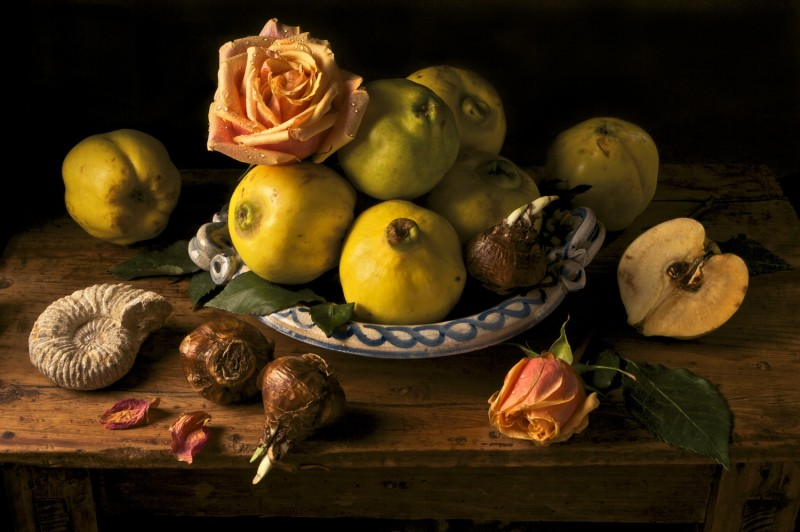 Paulette Tavormina, QUINCE, AFTER GG, 2008