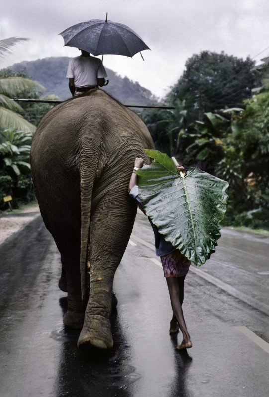 Steve Mccurry, YOUNG MAN WALKS BEHIND AN ELEPHANT, SRI LANKA, 1995