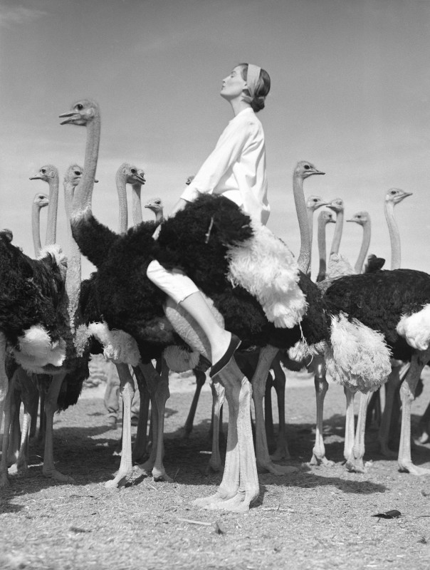Norman Parkinson, WENDA AND OSTRICHES, SOUTH AFRICA, 1951