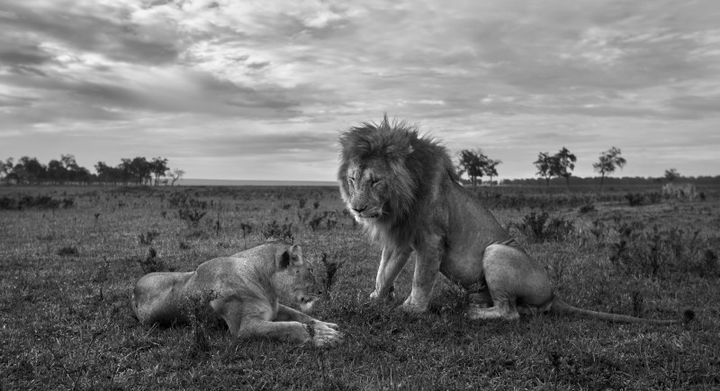 ANUP SHAH, LIPPY AND MORANI, FROM THE MARA SERIES, 2013