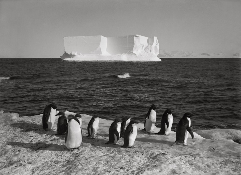 Herbert Ponting, PENGUINS AND A BERG AT CAPE ROYDS, 13 FEBRUARY 1911