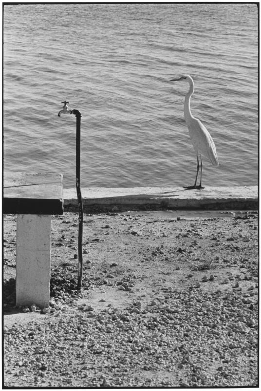 Elliott Erwitt, FLORIDA KEYS, 1968