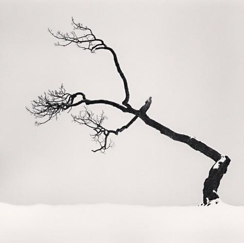 Michael Kenna, KUSSHARO LAKE TREE, STUDY NO 6, KOTAN, HOKKAIDO, JAPAN, 2007