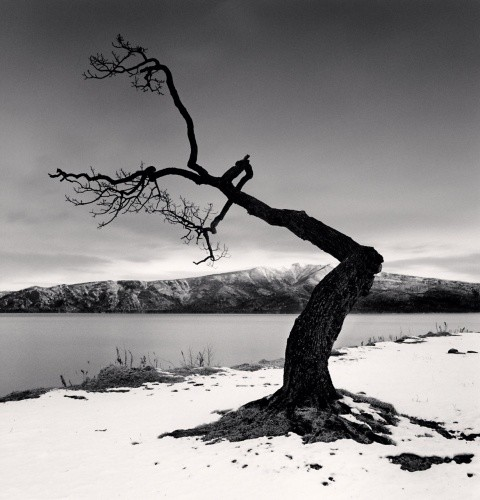 Michael Kenna, KUSSHARO LAKE TREE, STUDY 12, KOTAN, HOKKAIDO, JAPAN, 2008