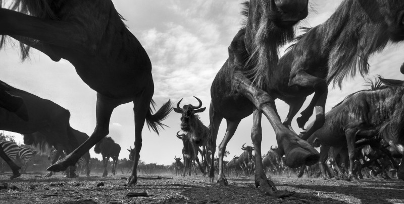 ANUP SHAH, FLIGHT, FROM THE MARA SERIES, 2011