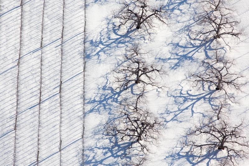 Alex Maclean, ORCHARD AND VINEYARD SNOW SHADOWS, BOLTON MASSACHUSETTS, USA, 2013