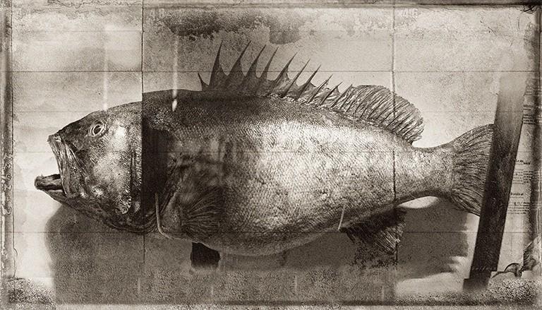 Jan Gulfoss, FISH