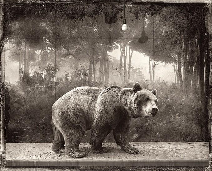 Jan Gulfoss, BROWN BEAR, 2015