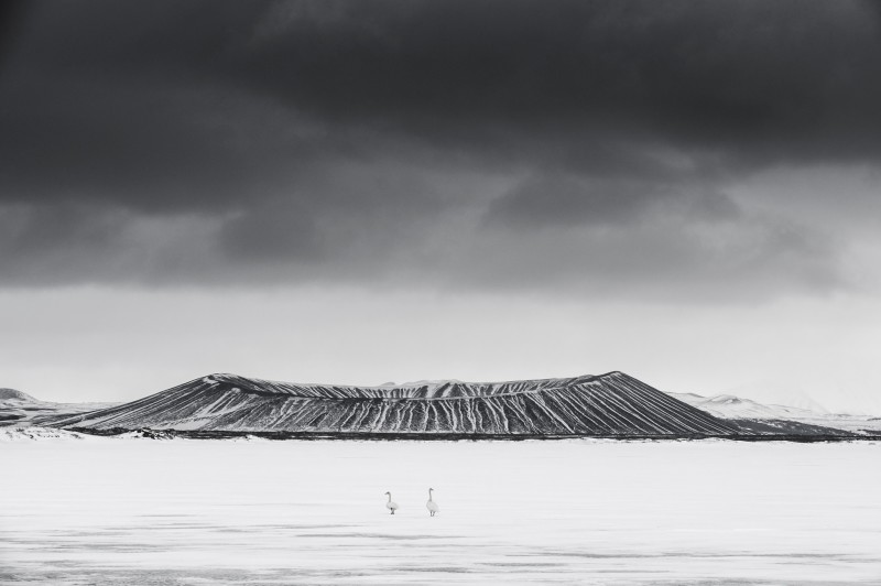 Vincent Munier, HVERFJALL VOLCANO AND WHOOPER SWANS, ICELAND, 2008