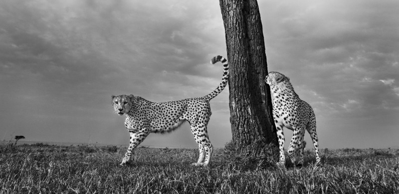 ANUP SHAH, PARTNERS ON PATROL, FROM THE MARA SERIES, 2009
