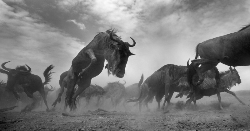 ANUP SHAH, TORRENT, FROM THE MARA SERIES, 2013