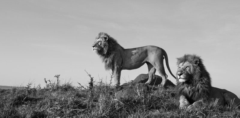 ANUP SHAH, WAITING, FROM THE MARA SERIES, 2014