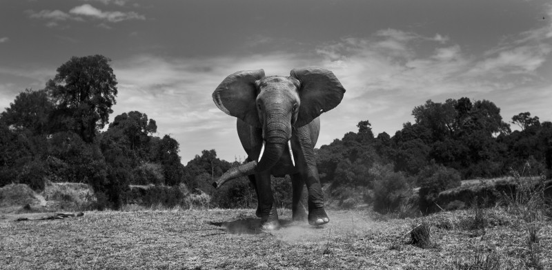 ANUP SHAH, WARY, FROM THE MARA SERIES, 2013