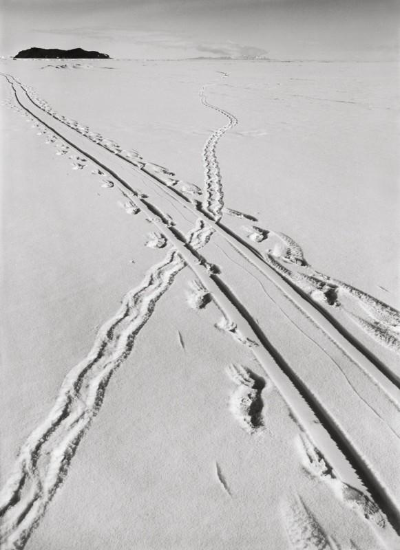 Herbert Ponting, ADELIE PENGUIN TRACKS AND SLEDGE TRACK CROSSING, 8 DECEMBER, 1911