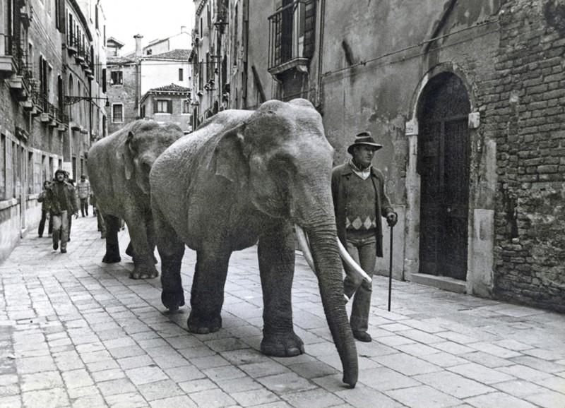 SARAH QUILL, ELEPHANTS, RIO TERRA DELLA MANDOLA, VENICE, 1981