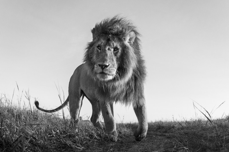 ANUP SHAH, HUNTER, FROM THE MARA SERIES, 2012