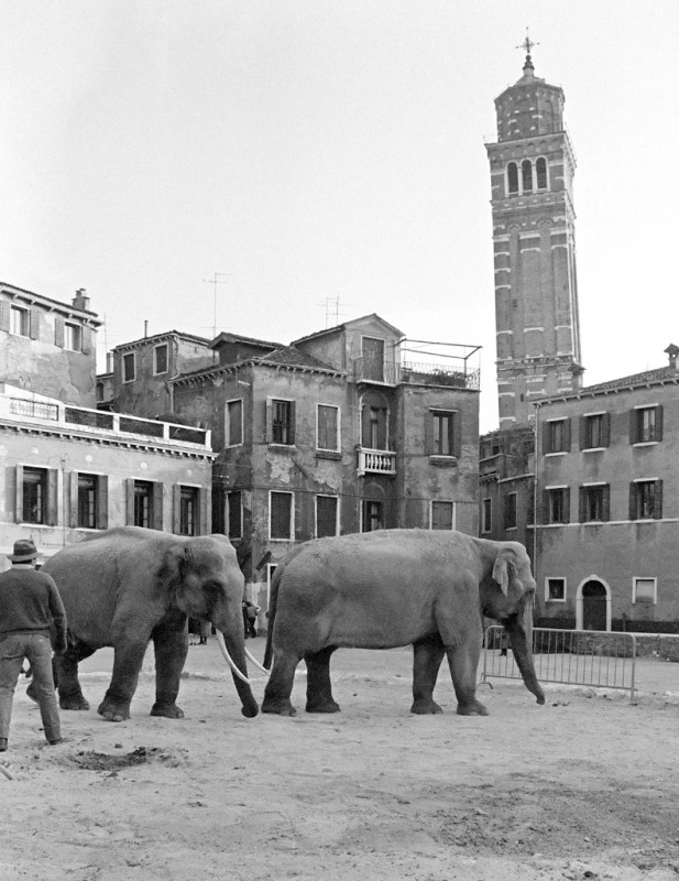 SARAH QUILL, ELEPHANTS, CAMPO SANT'ANGELO, VENICE, 1981