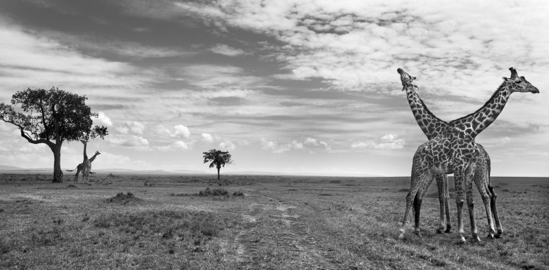 ANUP SHAH, THE DUEL, FROM THE MARA SERIES, 2014