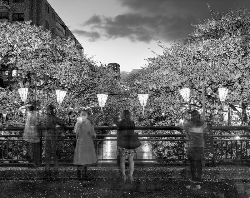 Matthew Pillsbury, HANAMI 9, MEGURO CANAL, FRIDAY APRIL 4TH, TOKYO, 2014