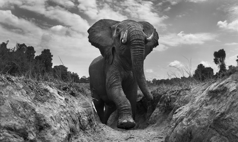 ANUP SHAH, MIGHTY, FROM THE MARA SERIES, 2012