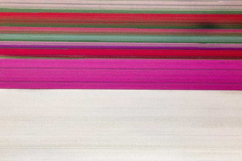 Alex Maclean, TULIP BANDS, RUTTEN, NETHERLANDS, 2015