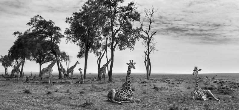 ANUP SHAH, CONTENTMENT, FROM THE MARA SERIES, 2014