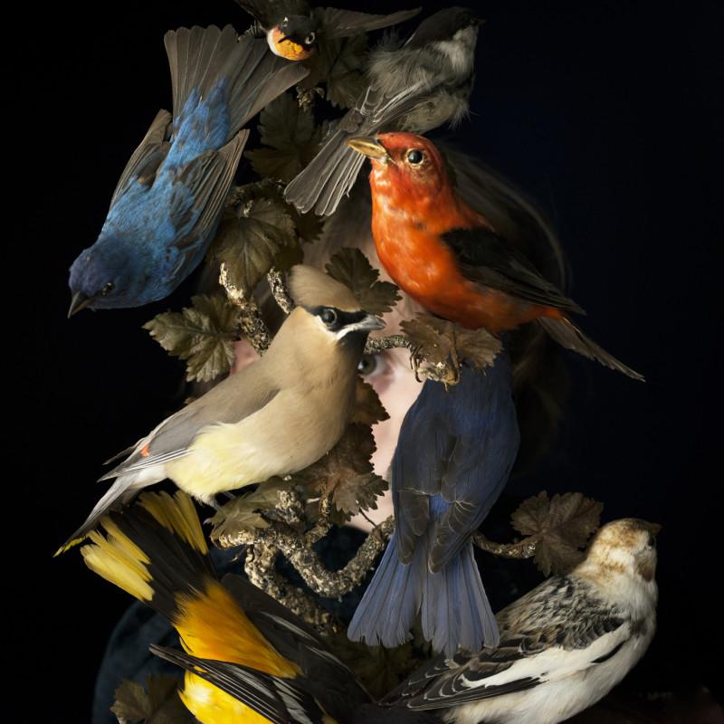 CIG HARVEY, BIRDS OF NEW ENGLAND, ROCKPORT, MAINE, 2016