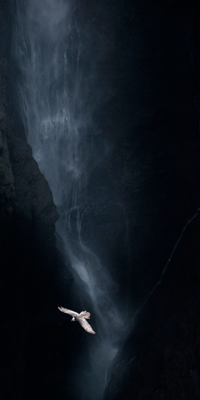 Vincent Munier, BEARDED VULTURE AND WATERFALL, ETHIOPIA, FROM THE SOLITUDES SERIES, 2013
