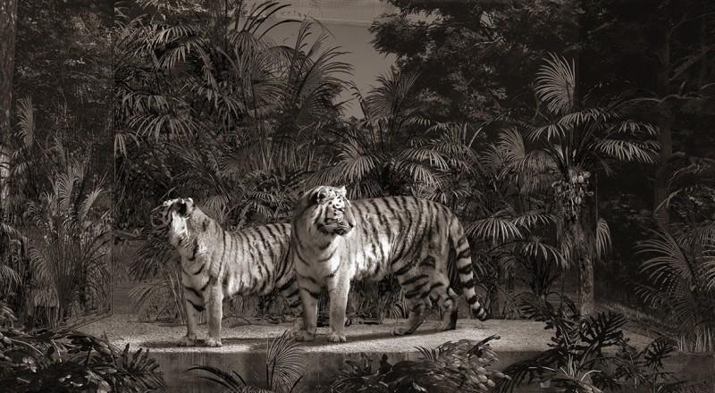 Jan Gulfoss, TIGERS