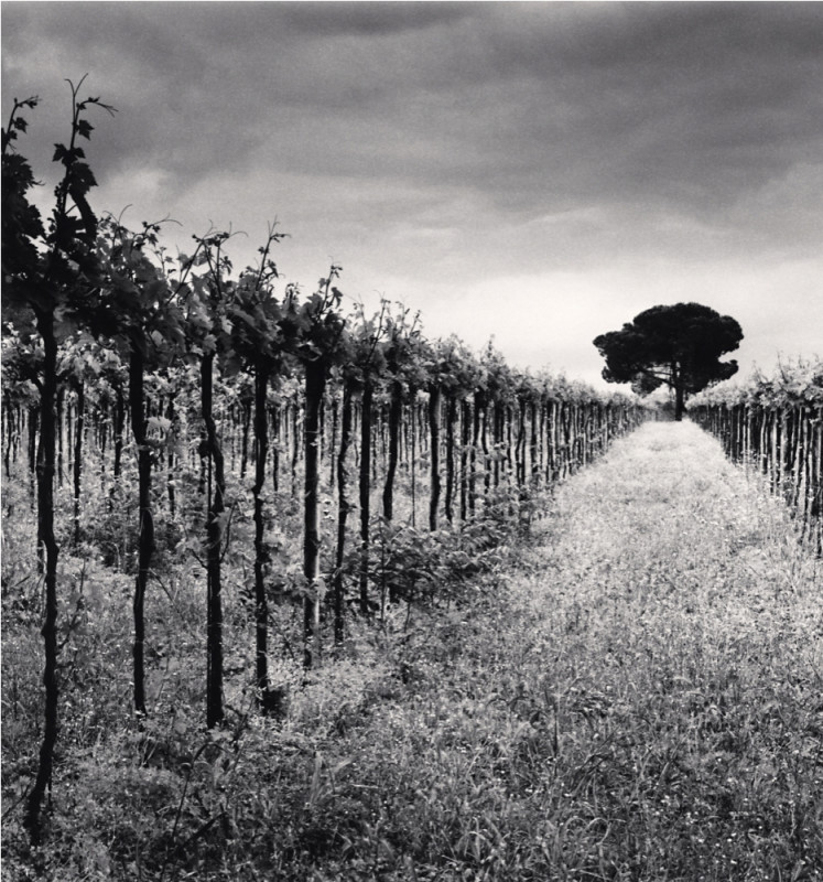 Michael Kenna, VINEYARD AND STONE PINE TREE, CEPAGATTI, ABRUZZO, ITALY, 2016