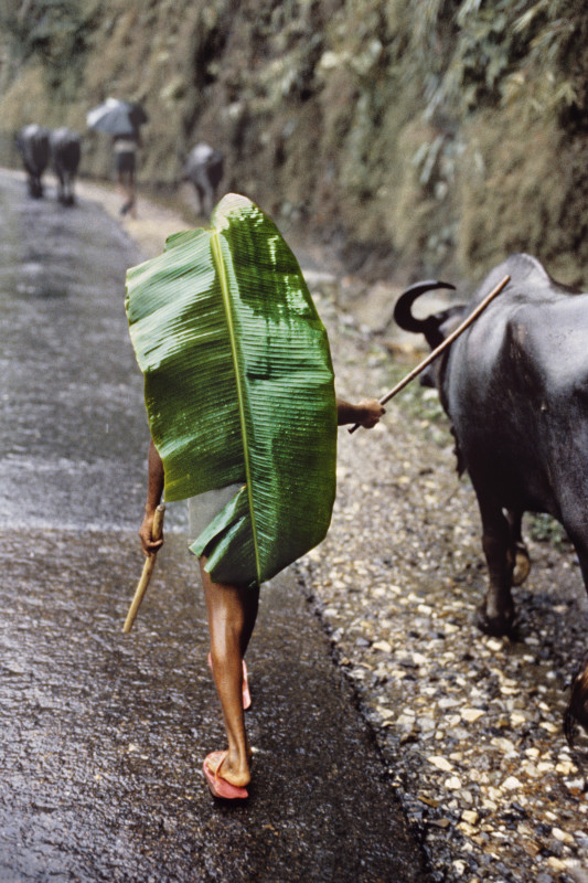 Steve McCurry, BOY WITH BANANA LEAF, NEPAL