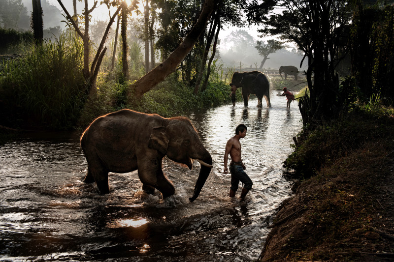 Steve McCurry, MEN AND ELEPHANTS, THAILAND