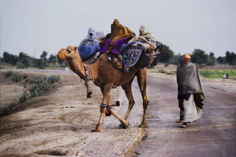 Steve McCurry, MEN AND WOMEN WITH CAMEL, BALUCHISTAN