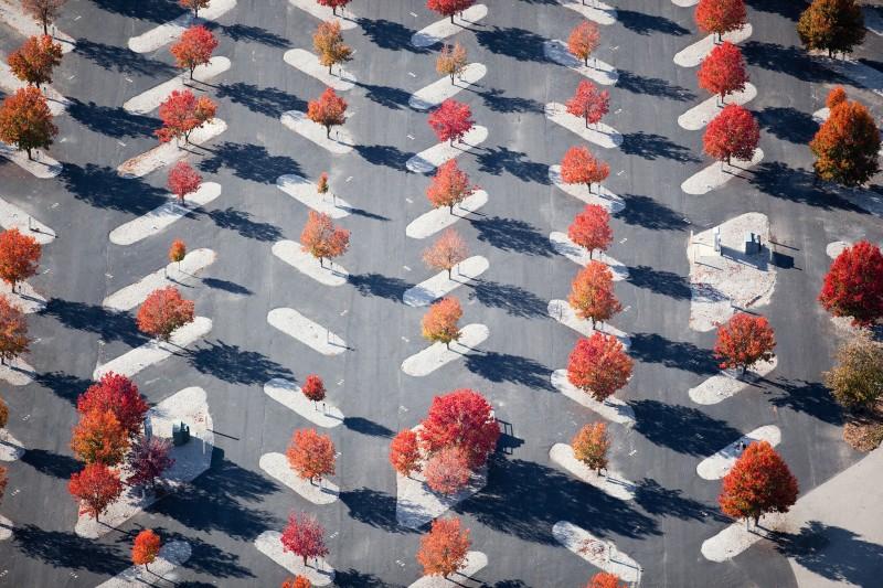 Alex Maclean, PARKING LOT MAPLE PLANTINGS, EAST ST. LOUIS, MISSOURI, USA, 2010