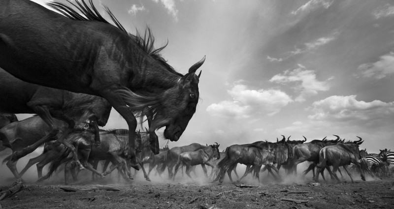 ANUP SHAH, SURGE, FROM THE MARA SERIES, 2013