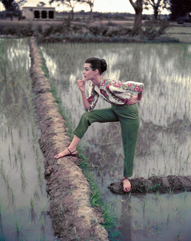 Norman Parkinson, PADDY FIELDS IN THE LATE SUMMER, INDIA, VOGUE, 1956