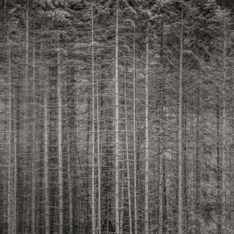 Jeffrey Conley, FOREST EDGE, OREGON, 2013