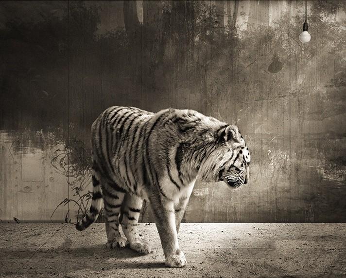 Jan Gulfoss, TIGER
