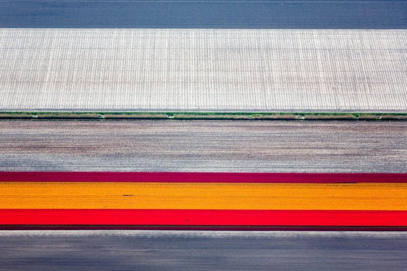 Alex Maclean, ORANGE TULIP STRIP, RUTTEN, NETHERLANDS, 2015