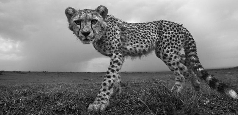 ANUP SHAH, PERPLEXED, FROM THE MARA SERIES, 2014